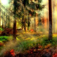 Лесной пожар изображение